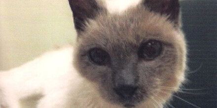 """Scooter"" (30) ist älteste Katze der Welt"