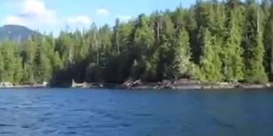 Adler stiehlt Fisch von Anglerboot