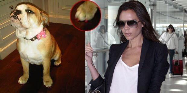 Victoria Beckham lackiert Hunde-Pfoten