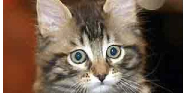 Schweizerin muss streunende Katzen füttern