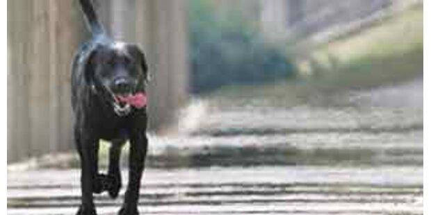 Streunender Hund schnappt sich Neugeborenes