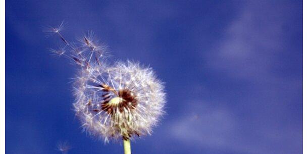 Pollenflug im Anmarsch