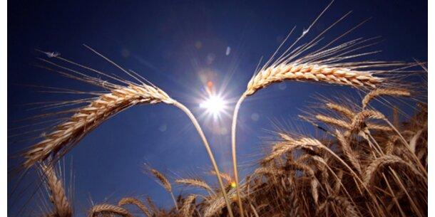 Bauern optimistisch für 2007
