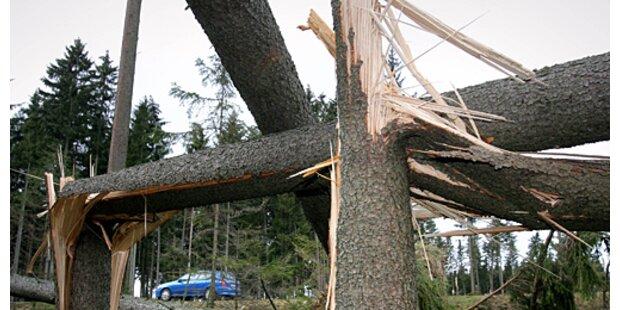 Sturm-Schäden im zweistelligen Mio.-Bereich