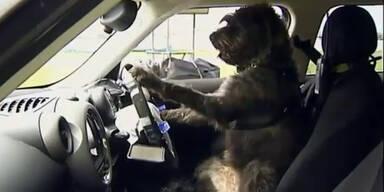 Dieses Auto wird von Hunden gesteuert