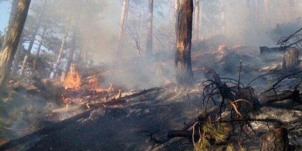 Waldbrand in Wien