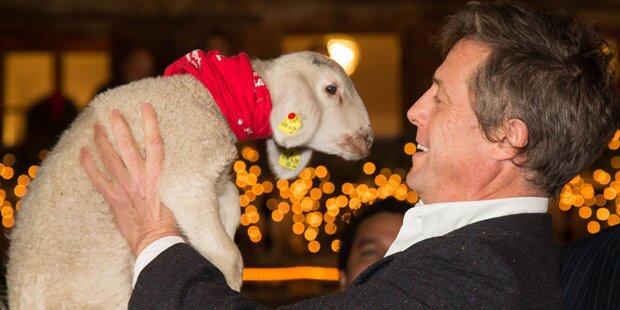 Hugh Grant herzte Schaf auf Aiderbichl