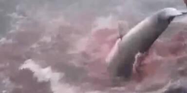 Japan darf keine Wale mehr jagen