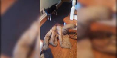 Süß: Hund steckt im Ärmel fest