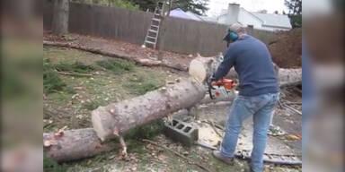 Umgefallener Baum stellt sich wieder auf