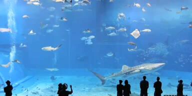 Beeindruckendes Riesen-Aquarium