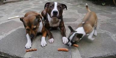 Hund schnappt die Würstel weg