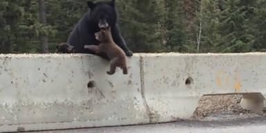 Bärenmutter rettet Baby vor Autos