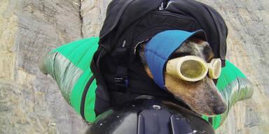 Hund macht ersten Basejump