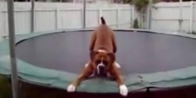 Süßer Hund am Trampolin
