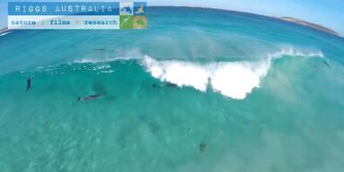 Delfine haben Spaß beim Wellenreiten