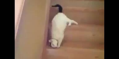 Katze als Stuntman
