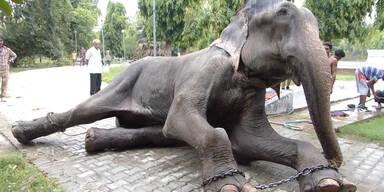 """Elefant """"Raju"""" bricht in Tränen aus"""