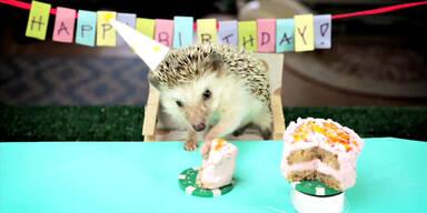So feiern kleine Igel ihren Geburtstag