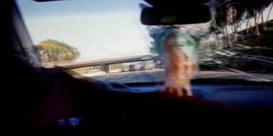 Giraffe wird von Brücke geköpft