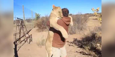 Löwe freut sich über Besuch von Freund