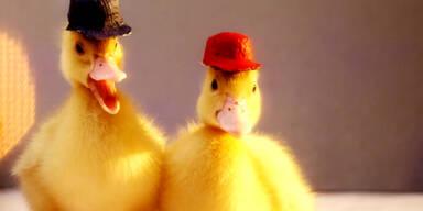 DuckTales mit echten Enten