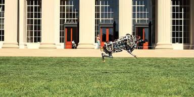 Wie sieht der schnellste Robotor der Welt aus?