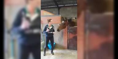 Pferd spürt den Groove total