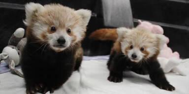 Diese Tiere sind zu süß