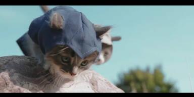 Kätzchen spielen Assassin's Creed