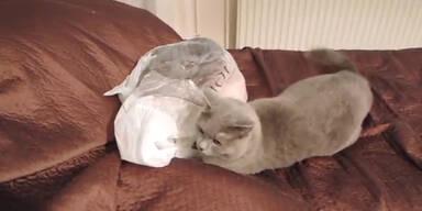 Katze weiss nicht, was im Sack ist