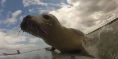 Robbe will auch mal Wellenreiten