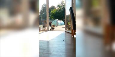 Hund steht vor unsichtbarer Tür