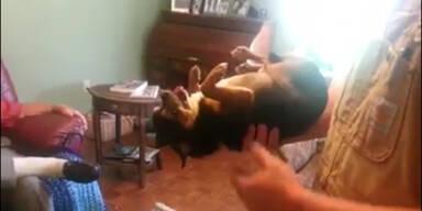 Hund spielt die perfekte Leiche