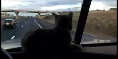 Trucker-Kätzchen fürchtet sich vor Überführung