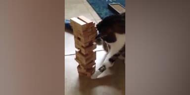 Katze spielt Jenga