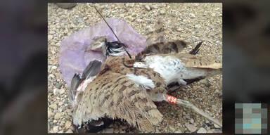 Vogel-Bombe entdeckt