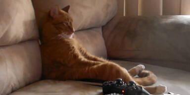 Katze steht auf Heavy Metal