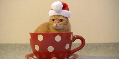 Katze findet in Tasse neues zu Hause