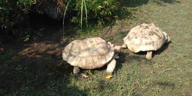 Schildkröten sind wahre Freunde