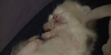 Katze adoptiert Pitbull-Welpen