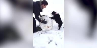 Hund baut einen Schneemann
