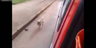 Treuer Hund verfolgt Herrchen