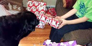Hund macht Geschenke auf