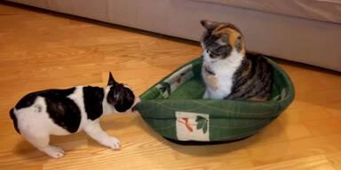 Katze stiehlt Hund den Schlafplatz