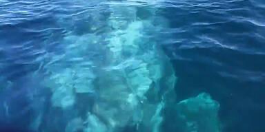 Begegnung mit Riesen-Wal