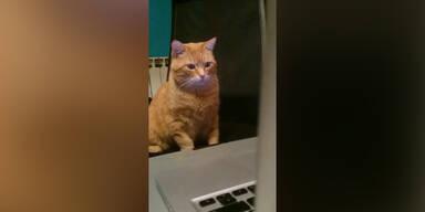 Katze liebt Tierdokumentationen