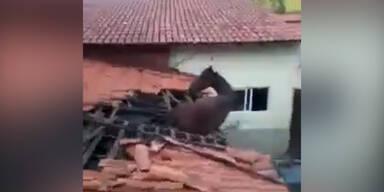 Pferd fällt von Dach