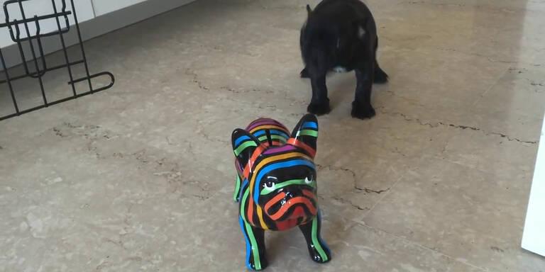 Hund gefällt sein Kunstwerk nicht