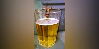 Kakerlake trinkt ein Bier